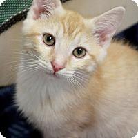Adopt A Pet :: Augustus - Youngsville, NC