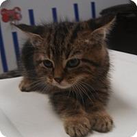 "Adopt A Pet :: Picatso ""$25 Fee in Dec"" - Ottawa, KS"