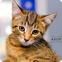 Adopt A Pet :: Glenn - Edwardsville, IL