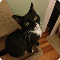 Adopt A Pet :: Leizel - East Hartford, CT