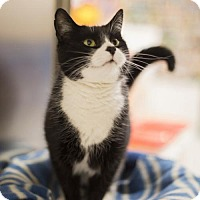 Adopt A Pet :: Jessica - Salem, MA