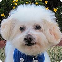 Adopt A Pet :: Jeffy - La Costa, CA