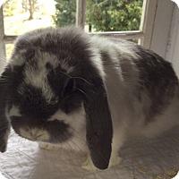 Adopt A Pet :: PeeWee aka Sally - Moneta, VA