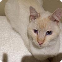 Adopt A Pet :: Opie - Whittier, CA