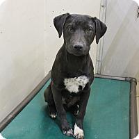 Adopt A Pet :: A13 Sven - Odessa, TX