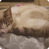 Adopt A Pet :: Lucky - Herndon, VA