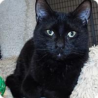 Adopt A Pet :: Kirk - Grants Pass, OR