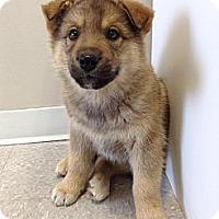Adopt A Pet :: Leonard - Saskatoon, SK
