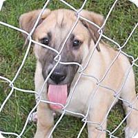 Adopt A Pet :: Grant - Plano, TX