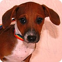 Adopt A Pet :: Gizelle - Gilbert, AZ