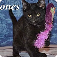 Adopt A Pet :: Jones - Troy, OH