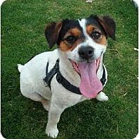 Adopt A Pet :: HARLEY - Phoenix, AZ