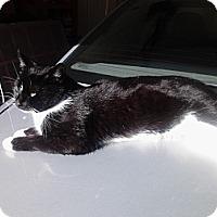 Adopt A Pet :: *Kindall - Winder, GA