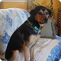 Adopt A Pet :: Maggie Mae - Raritan, NJ