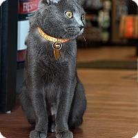 Adopt A Pet :: Zenna - Edmonton, AB
