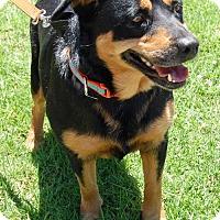 Adopt A Pet :: Frida - West Los Angeles, CA