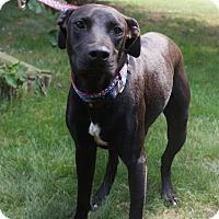 Adopt A Pet :: Shadow - Baden, PA