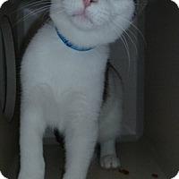 Adopt A Pet :: Charlie - Hamburg, NY