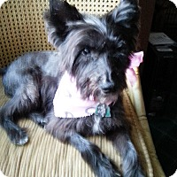 Adopt A Pet :: CALAMITY JANE IN TX - Fort Worth, TX