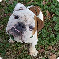 Adopt A Pet :: Finn - Santa Ana, CA