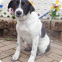 Adopt A Pet :: Lark - West Chicago, IL