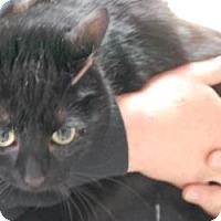 Adopt A Pet :: May - Brooklyn, NY