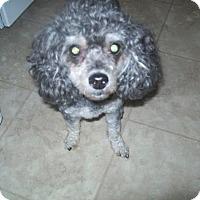 Adopt A Pet :: Poppy - Bernardston, MA
