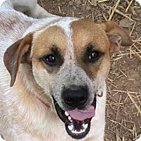 Adopt A Pet :: Buster Evans - Trenton, NJ