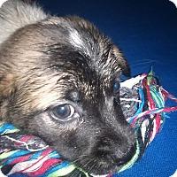 Adopt A Pet :: Roxann - Kendall, NY