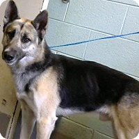 German Shepherd Dog Mix Dog for adoption in Decatur, Georgia - Jumbo - Adopted