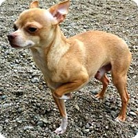 Adopt A Pet :: Tank - Columbus, NE