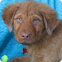 Adopt A Pet :: Nathan Voss - Cuba, NY