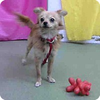 Adopt A Pet :: URGENT on 12/11 @DEVORE - San Bernardino, CA