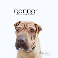 Adopt A Pet :: Connor - Mira Loma, CA