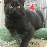Adopt A Pet :: Flary and Bolt - Fairfax, VA