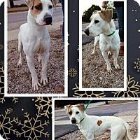 Adopt A Pet :: Bentley - Tucson, AZ