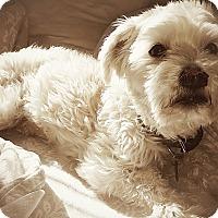 Adopt A Pet :: Scout - Tijeras, NM