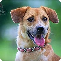 Adopt A Pet :: Freckles - Thomaston, GA