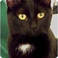 Adopt A Pet :: Kielie - Sacramento, CA
