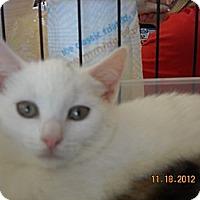 Adopt A Pet :: Kaitlyn - Riverside, RI
