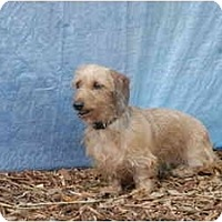 Adopt A Pet :: Snickers - Ft. Myers, FL