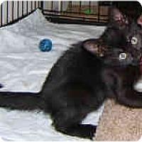 Adopt A Pet :: Ebony Sky - Dallas, TX
