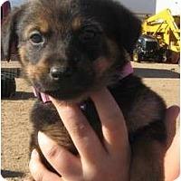 Adopt A Pet :: Lizzie - Golden Valley, AZ
