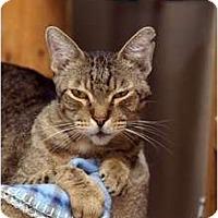 Adopt A Pet :: Skinny - Scottsdale, AZ