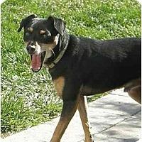 Adopt A Pet :: Bogey - Meridian, ID