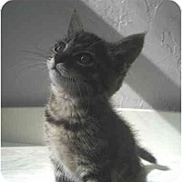 Adopt A Pet :: Wayne - Davis, CA