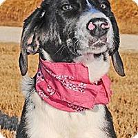 Adopt A Pet :: Kimbery - Gonzales, TX