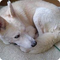 Adopt A Pet :: Laszlo - Seymour, CT
