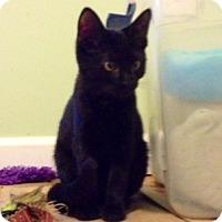 Adopt A Pet :: Cisco - Monroe, GA