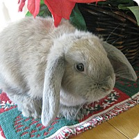 Adopt A Pet :: Rudy - Bonita, CA